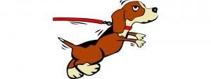 dog pulling lead