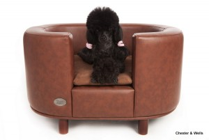 C&W Hampton Brown Dog