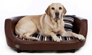 C&W oxford II brown dog