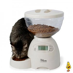 Cat Feeders & Water Fountains