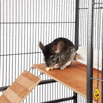 Chinchilla & Rat Cages