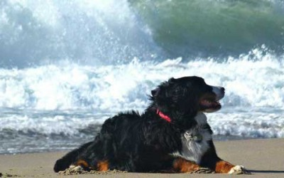 Taking your dog on holiday abroad? Take preventative action!