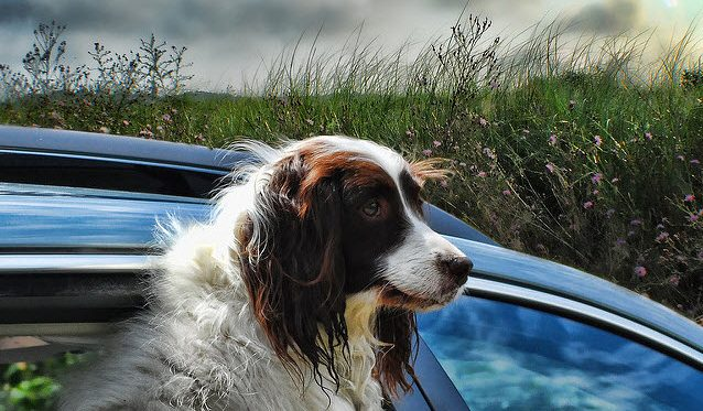 Planning a road trip with your pet?